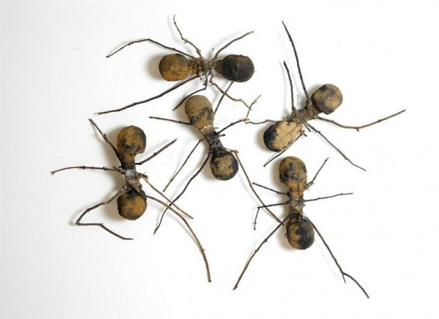 Ameisen von Rafael Gomez Barros